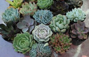 Garden with the Masters: Raising Succulents
